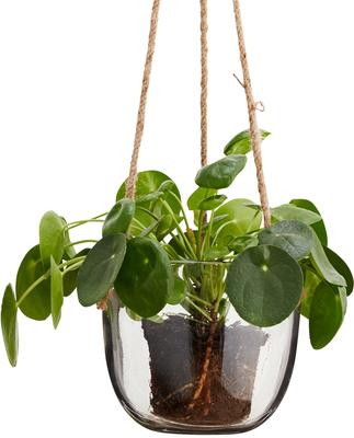 Hanging Glass Planter with Jute Cord