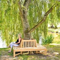 Roble Tree Bench