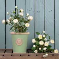 Kew Royal Botanic Gardens Long Tom Pot  Faux Baby Rose Shrub - Chartwell Green by The Orchard